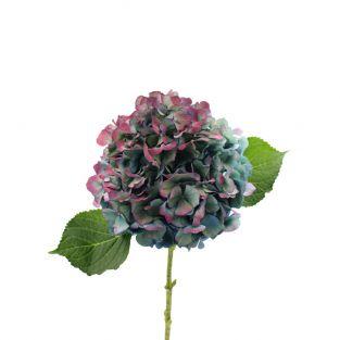 Hydrangea Antique Blue - New Zealand
