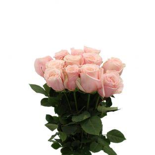 Rose Garden Paul Ricard - Kenya