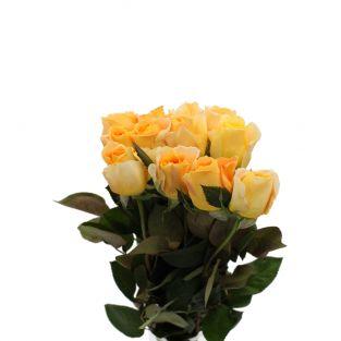 Rose Garden Yellow Orange - Kenya