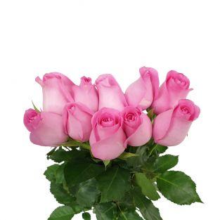 Rose Revival Pink - Kenya