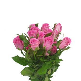 Rose Shocking Pink Bonear - India