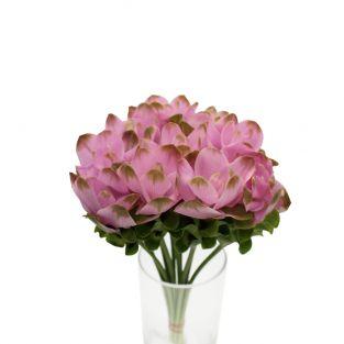 Curcuma Dark Pink - Thailand