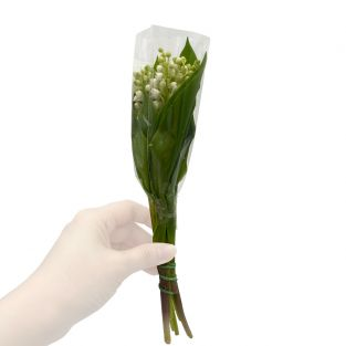 Lily of the Valley - Holland