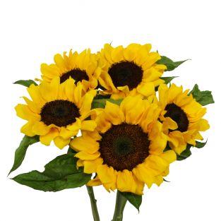Sunflower - Malaysia