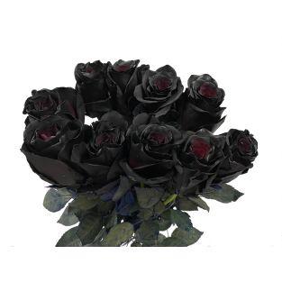 Rose Tinted Black - Ecuador
